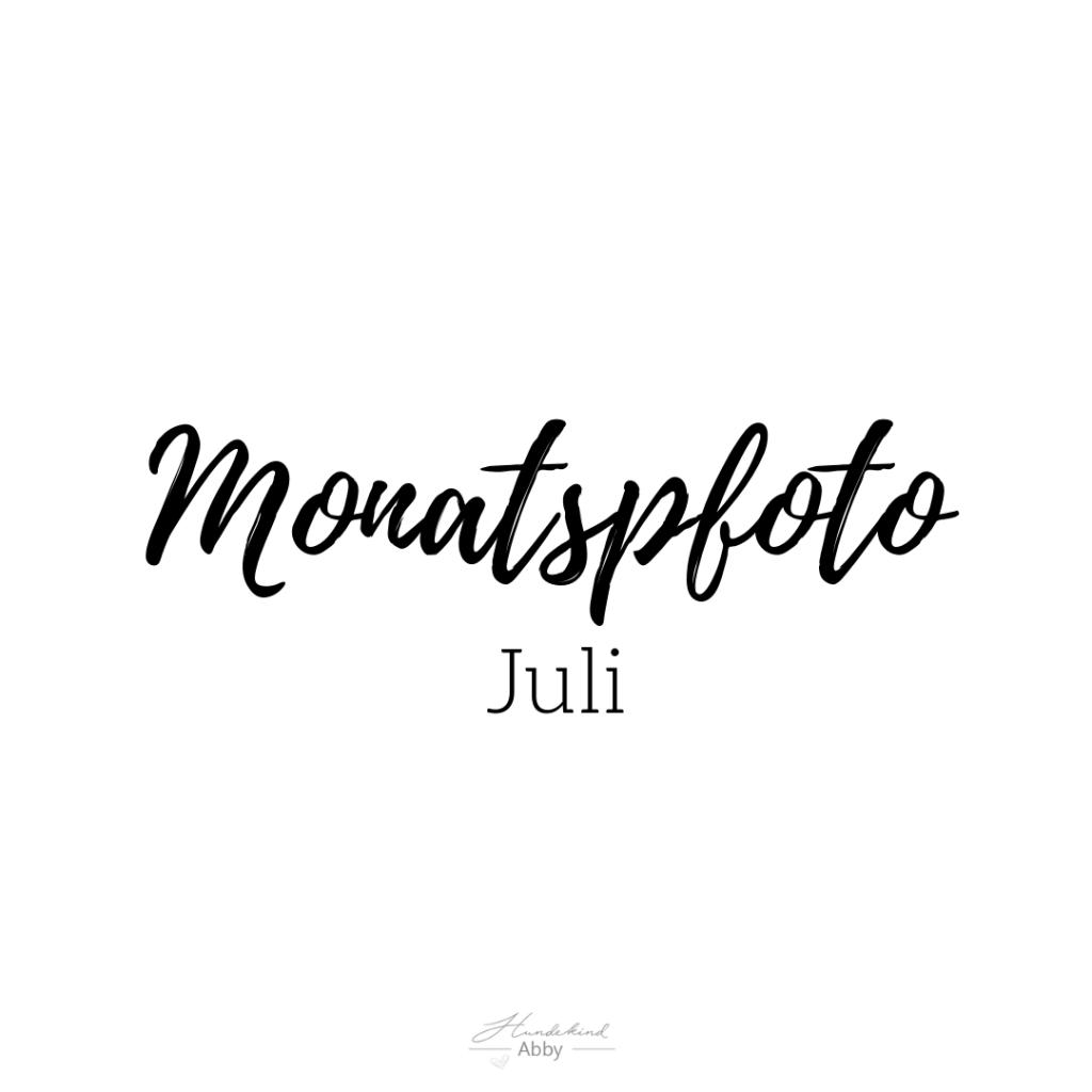 Monatspfoto-1024x1024 %Hundeblog