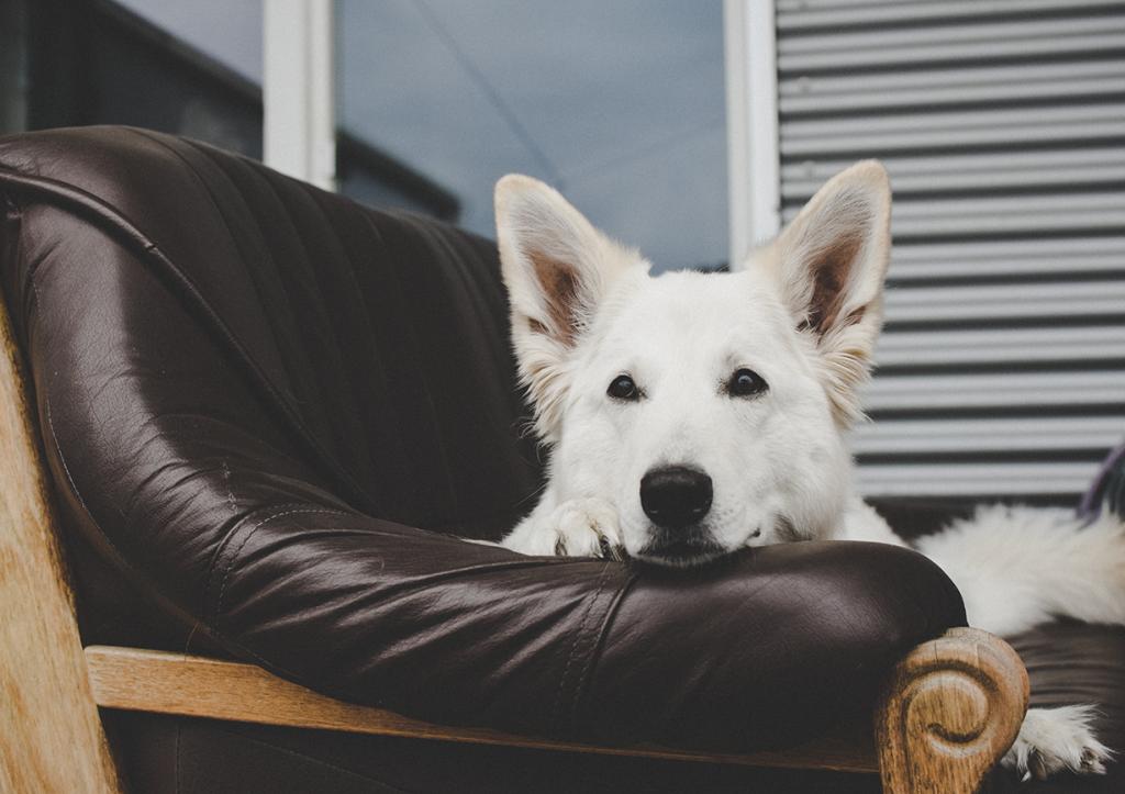 Tipps-Fotografie-23Regel-1024x723 %Hundeblog