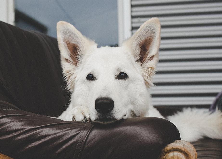 Tipps-Fotografie-23Regel-Mitte %Hundeblog