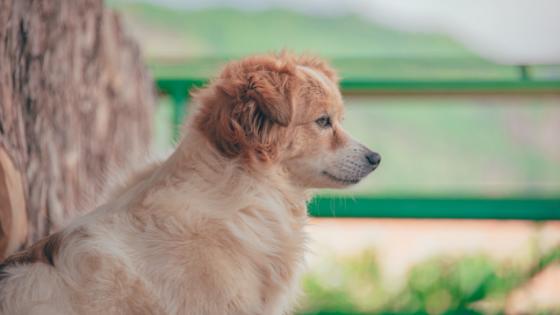 Welpen-Barfen-1 %Hundeblog