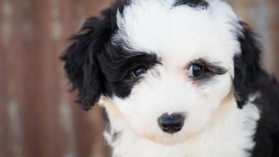 Welpen-Barfen-2 %Hundeblog