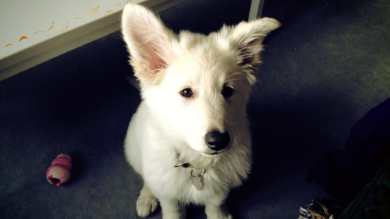 Welpen-Barfen-3 %Hundeblog