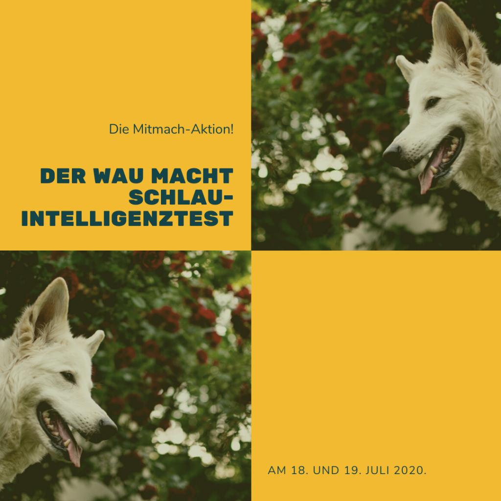 Der-Wau-macht-Schlau-Intelligenztest-1024x1024 %Hundeblog