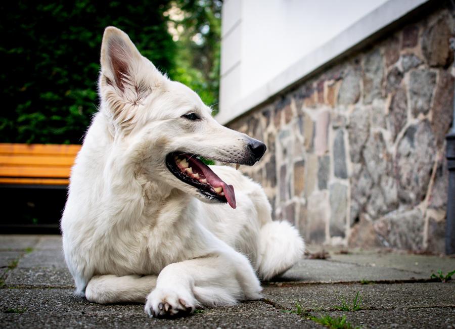 Lieblingspose-1 %Hundeblog