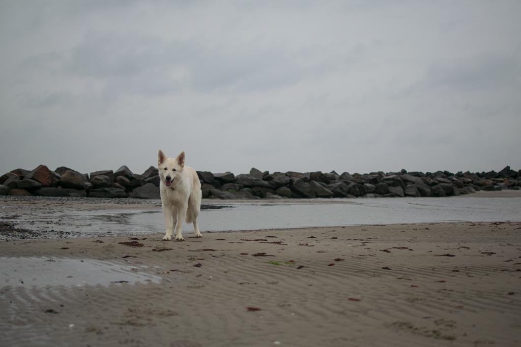 Brasilien-Abby-1024x683 %Hundeblog