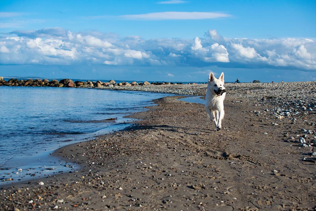 Lieblingsstrand-Abby-1024x683 %Hundeblog
