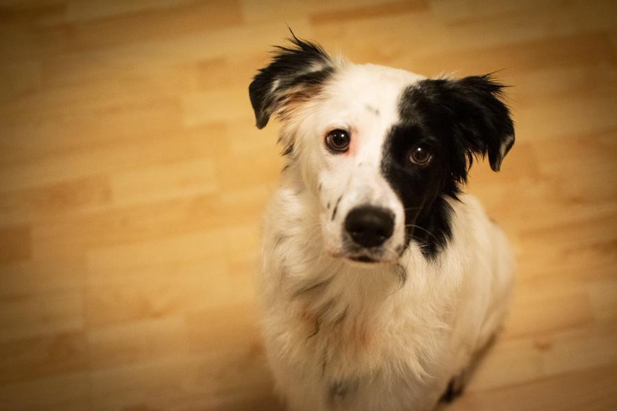 Pixel-Vorstellungsfoto %Hundeblog