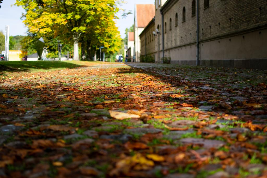Schleswig-Schloss-Gelaende-1024x683 %Hundeblog