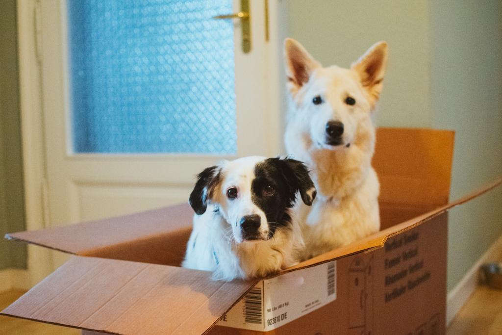 AbbyPixelBox %Hundeblog