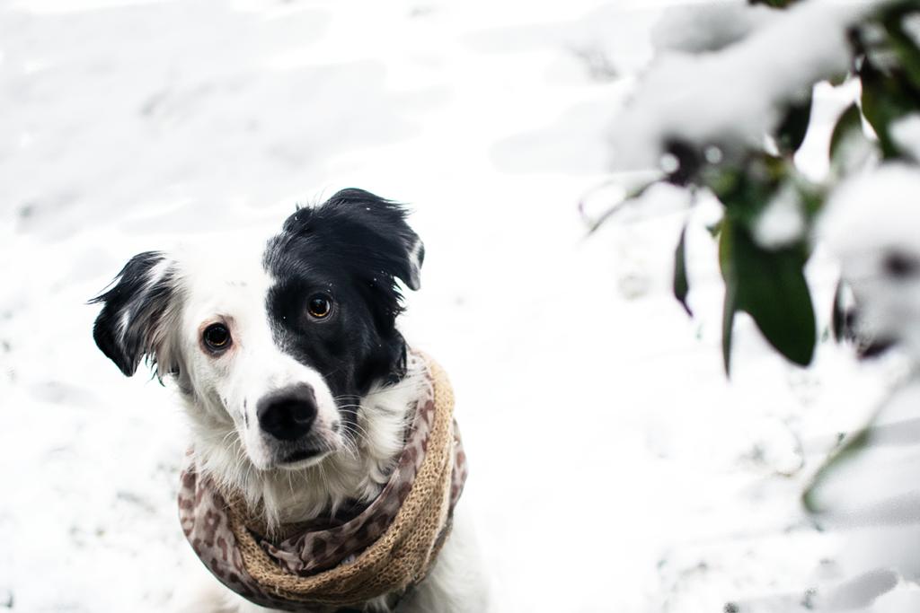 Portrait1-1024x683 %Hundeblog