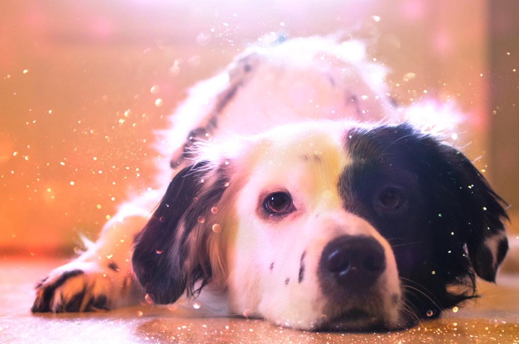 Wochenfoto2-1024x679 %Hundeblog